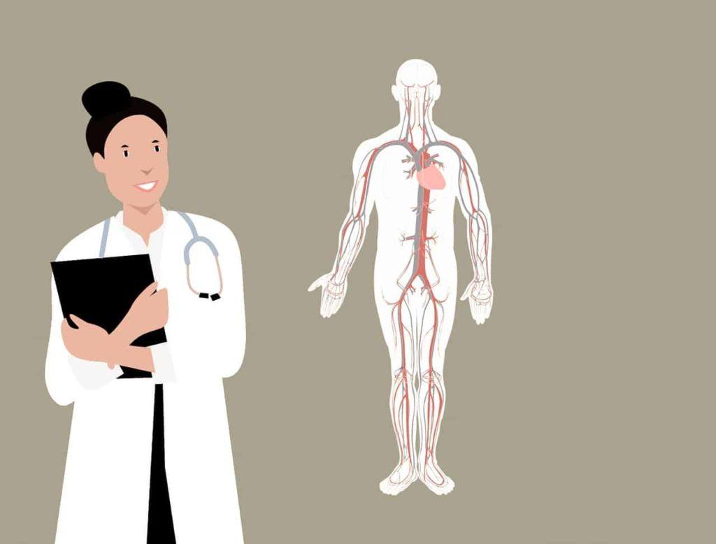 גוף האדם ורופאה