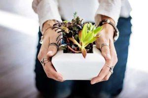 צמחיה מלאכותית