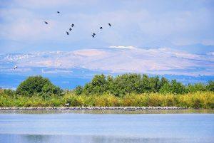 נוף ישראלי וציפורים