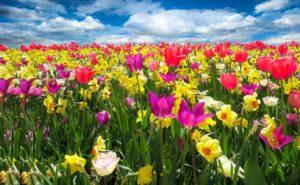 פרחים בצבעים שונים