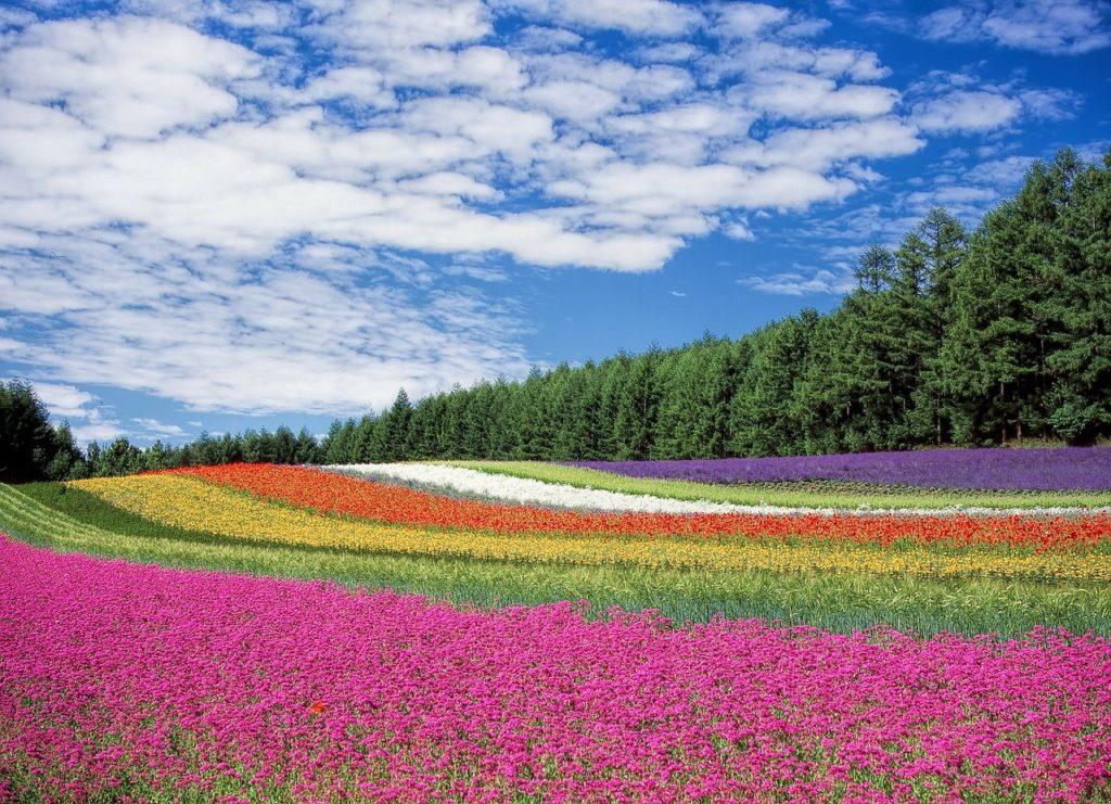 נוף פרחים - בצבעים שונים